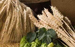 Несколько способов приготовления солодовой браги
