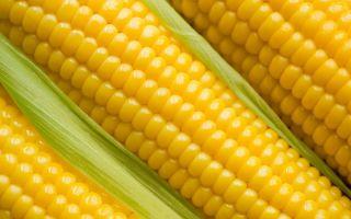 Лучшие рецепты приготовления кукурузной браги