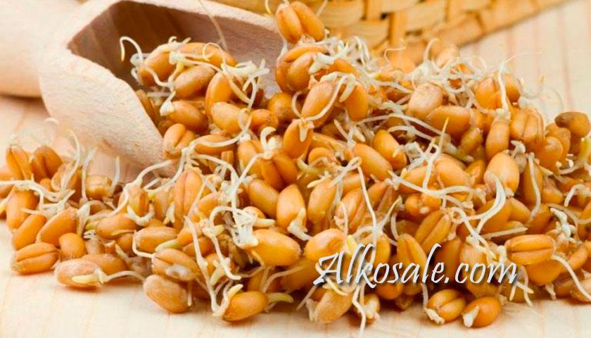 брага на пшенице без дрожжей