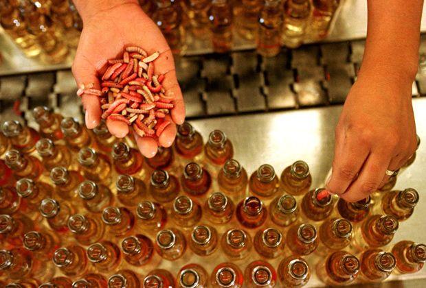 мескаль что это такое, отличие мескаля от текилы, мескаль с гусеницей, мескаль с червяком, Как правильно пить мескаль