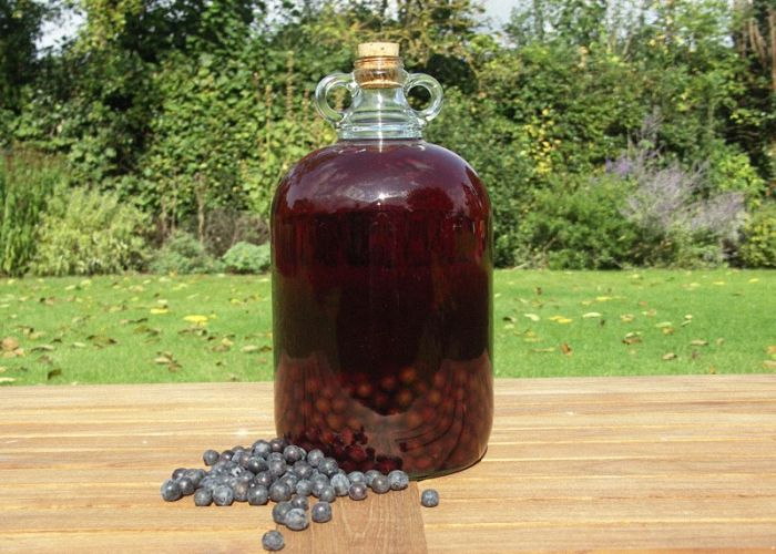 Как из терна сделать вино