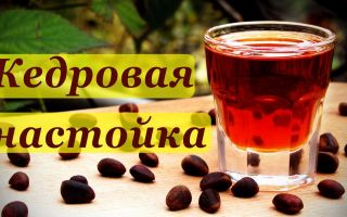 Настойка на кедровых орехах на водке — рецепт