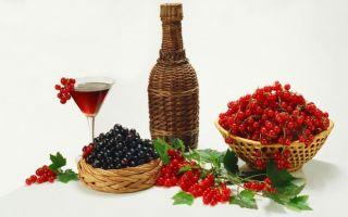 Натуральные вина из красной и черной смородины в домашних условиях