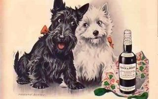 Виски Блэк Энд Вайт | Виски Black and White